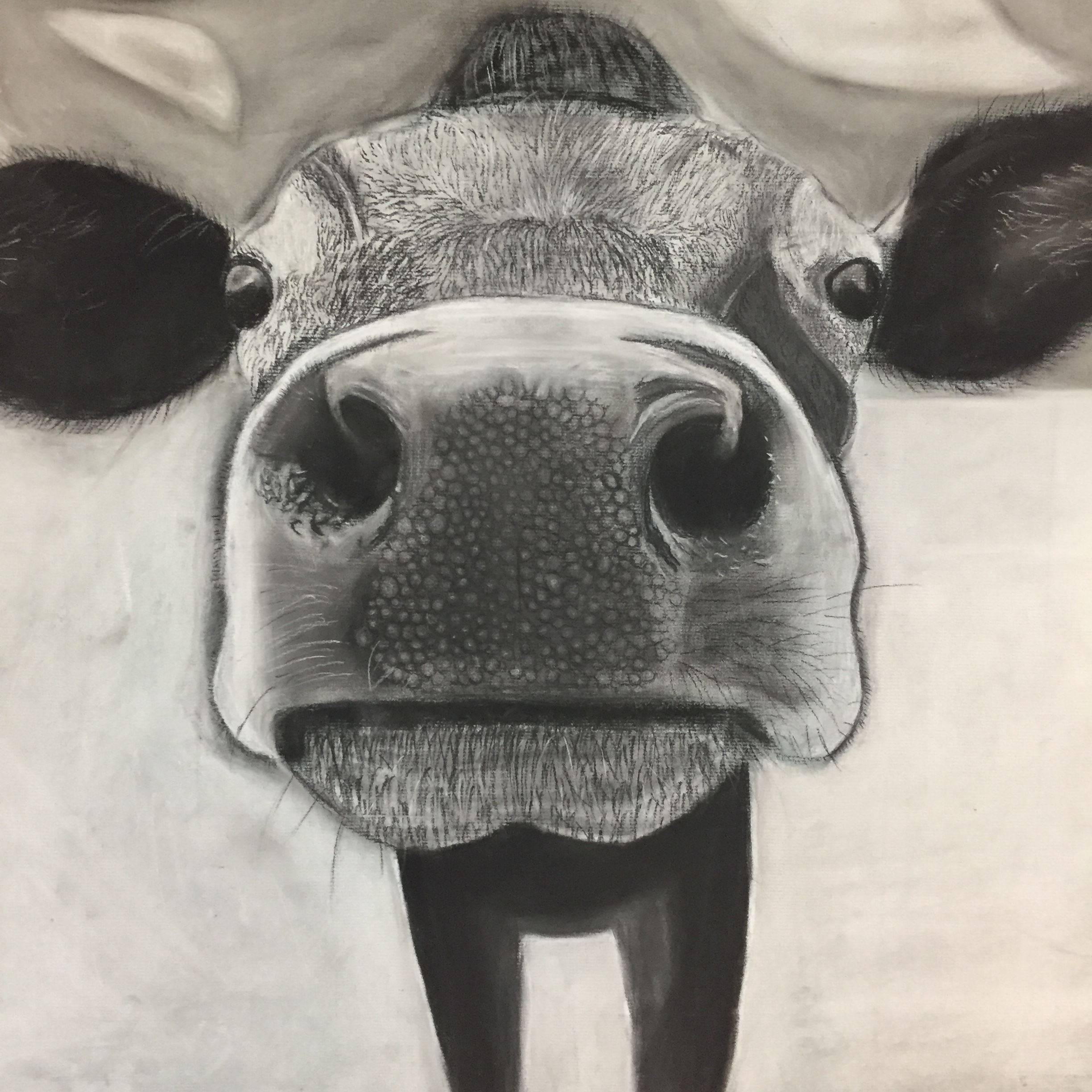 Black and white sketch of up-close cow face